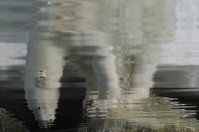 Polar Bear Reflection-Staffan Widstrand-Giclee Print