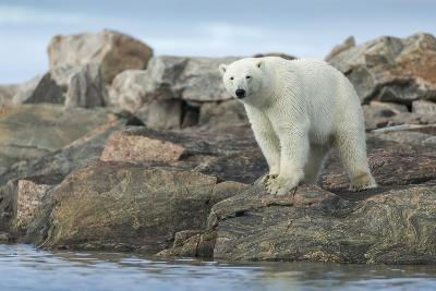 Polar Bear Standing at Water's Edge Along Hudson Bay Near Arctic Circle,Canada-Paul Souders-Photographic Print