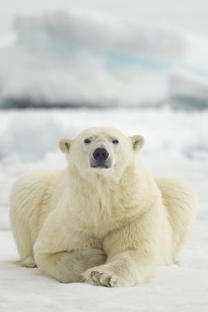 https://imgc.artprintimages.com/img/print/polar-bear-svalbard-norway_u-l-pzmsyp0.jpg?p=0