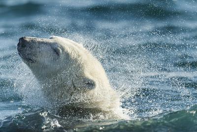 Polar Bear Swimming in Hudson Bay, Nunavut, Canada-Paul Souders-Photographic Print