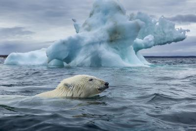 Polar Bear Swimming Past Melting Iceberg Near Harbor Islands,Canada-Paul Souders-Photographic Print