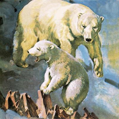 Polar Bear-McConnell-Giclee Print