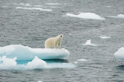 Polar Bear-DLILLC-Photographic Print