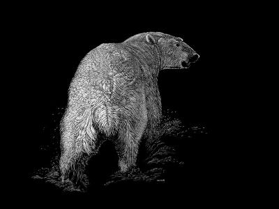 Polar Bear-Geraldine Aikman-Giclee Print