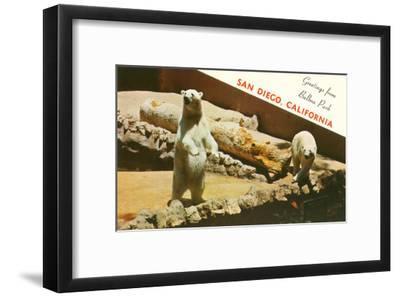 Polar Bears, San Diego Zoo