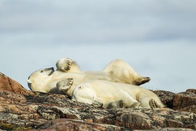 Polar Bears Sleeping on Harbour Islands, Hudson Bay, Nunavut, Canada-Paul Souders-Photographic Print