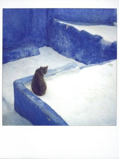 Polaroid of a Cat Sitting on Whitewashed Path, Chefchaouen, Morocco, North Africa, Africa-Lee Frost-Photographic Print