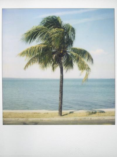 Polaroid of Single Palm Tree with Caribbean Sea in Background, Cienfuegos, Cuba, West Indies-Lee Frost-Photographic Print
