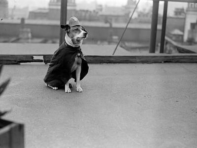 Police Dog--Photographic Print