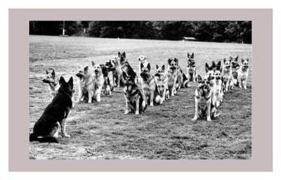 Police Dogs on Parade--Art Print