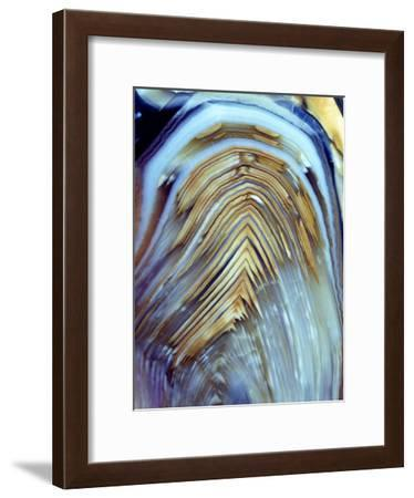 Polished Pebble of a Fossil Fern Stem-Dirk Wiersma-Framed Photographic Print