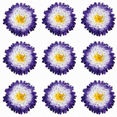https://imgc.artprintimages.com/img/print/polka-flowers-i_u-l-f5w6vi0.jpg?p=0