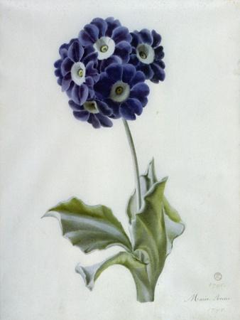 https://imgc.artprintimages.com/img/print/polyanthus_u-l-puq9an0.jpg?artPerspective=n