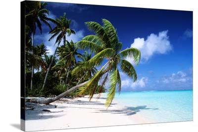 Polynesian Beach--Stretched Canvas Print