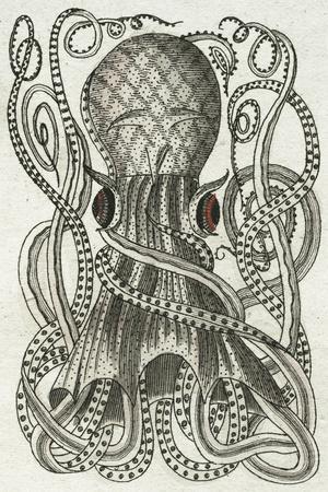 https://imgc.artprintimages.com/img/print/polypus-i_u-l-f7tx8r0.jpg?p=0
