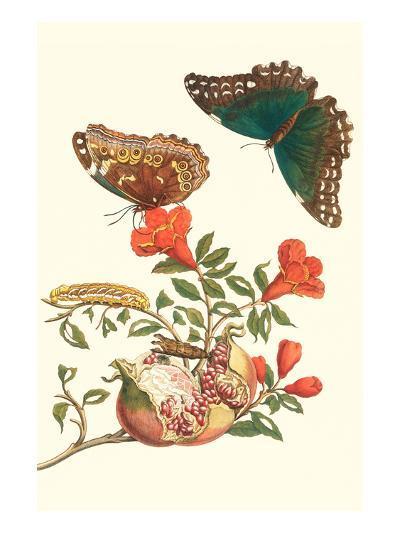 Pomegranate and Butterflies-Maria Sibylla Merian-Premium Giclee Print