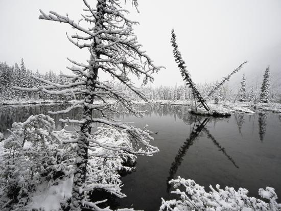 Pond and Forest in Winter-John Eastcott & Yva Momatiuk-Photographic Print