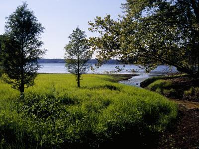 Pond Cypress Trees Growing Along the Shore of Kentucky Lake-Raymond Gehman-Photographic Print