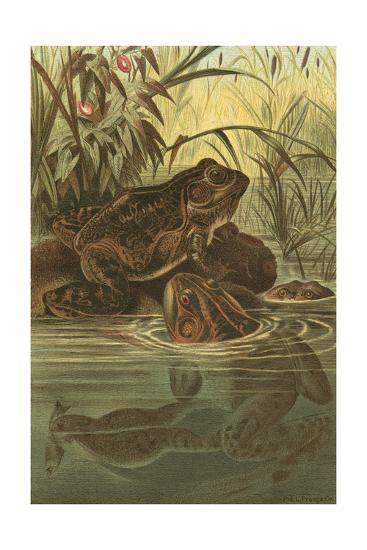 Pond Frogs- Prang-Art Print