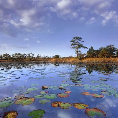 Pond Lilies, Jonathan Dickinson State Park, Florida, Usa-Tim Fitzharris-Photographic Print