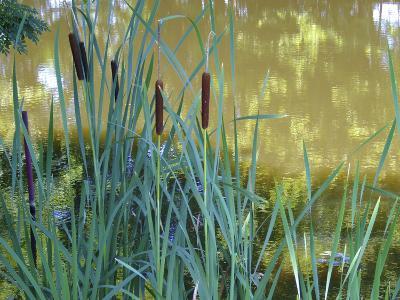 Pond-Anna Miller-Photographic Print