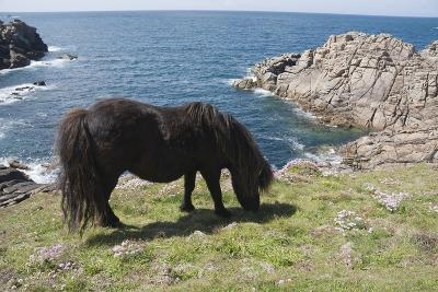 Ponies on Bryher, Isles of Scilly, Cornwall, United Kingdom, Europe-Robert Harding-Photographic Print