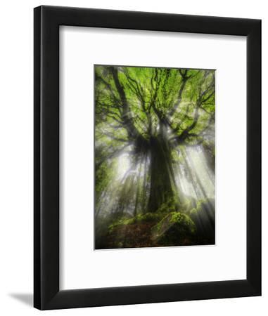 Ponthus Beech Tree 2-Philippe Manguin-Framed Photographic Print
