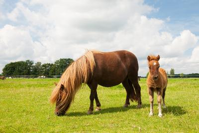 Pony and Young Foal in the Meadows-Ivonne Wierink-Photographic Print