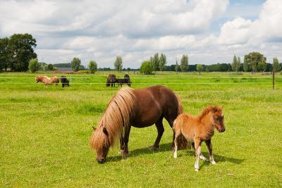 Pony in the Meadows-Ivonne Wierink-Photographic Print