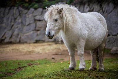 Pony- jurra8-Photographic Print