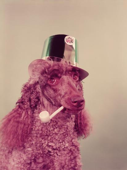 Poodle Dog With Pipe in Mouth, Wearing Green Paper Party Hat For St Patrick's Day-H^ Armstrong Roberts-Photographic Print