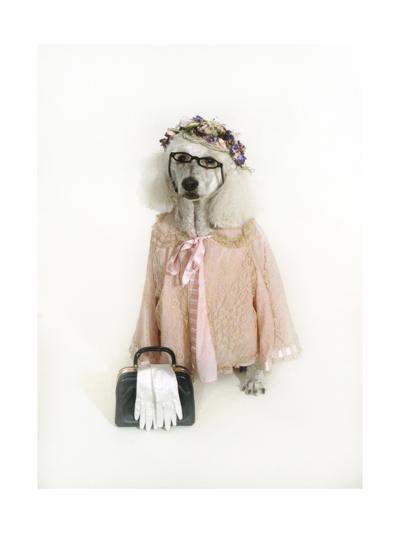 Poodle Dressed as Older Woman-Nora Hernandez-Giclee Print