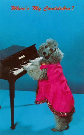 Poodle Playing Piano