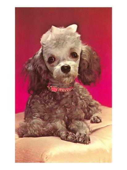 Poodle Pup--Art Print