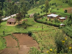 Aerial View of Children Leaving School and Terraced Fields, Kabale, Uganda, Africa by Poole David