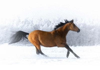 Pop of Color Running Horse-Color Me Happy-Art Print