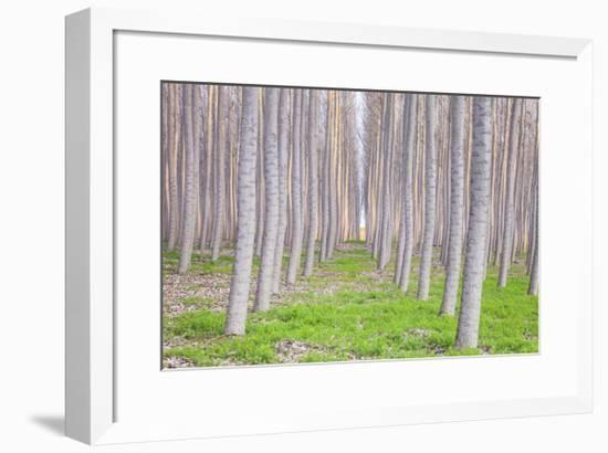 Poplar Forest-Jason Matias-Framed Giclee Print