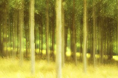 Poplar Trees, France, Europe-Craig Easton-Photographic Print