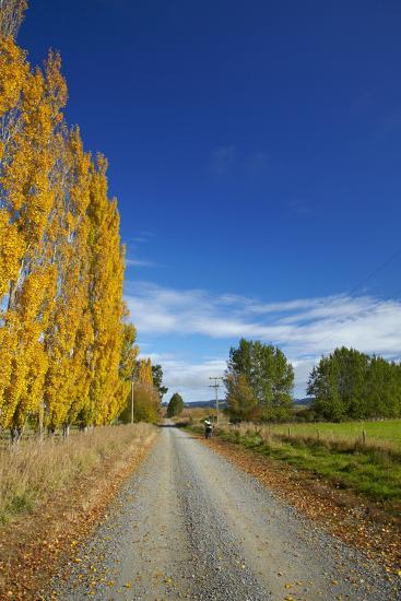 Poplar Trees in Autumn and Road, Near Lovells Flat, South Otago, South Island, New Zealand-David Wall-Photographic Print