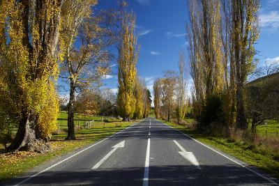 Poplar Trees in Autumn at Entrance to Lawrence, Central Otago, South Island, New Zealand-David Wall-Photographic Print