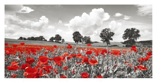 Poppies and vicias in meadow, Mecklenburg Lake District, Germany-Frank Krahmer-Giclee Print