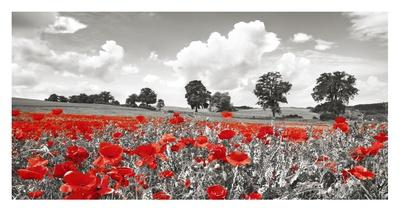 https://imgc.artprintimages.com/img/print/poppies-and-vicias-in-meadow-mecklenburg-lake-district-germany_u-l-f8wcha0.jpg?p=0