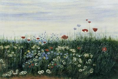 https://imgc.artprintimages.com/img/print/poppies-daisies-and-other-flowers-by-the-sea_u-l-pla49c0.jpg?p=0