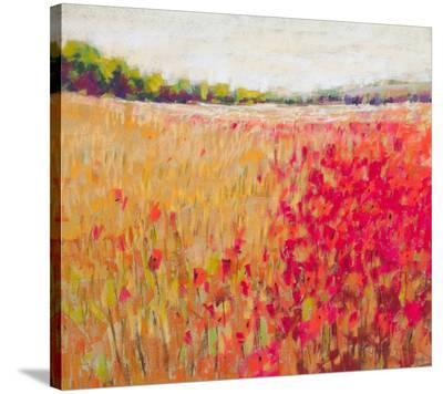 Poppies Evening Light V--Stretched Canvas Print