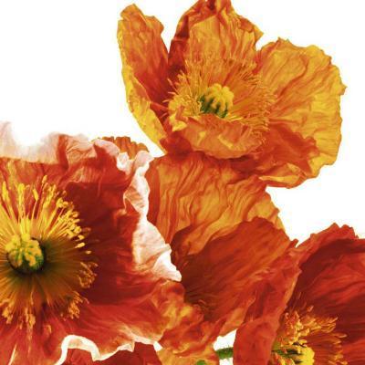 Poppies II-Richard Weinstein-Art Print