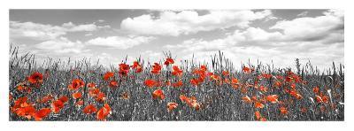 Poppies in corn field, Bavaria, Germany-Frank Krahmer-Giclee Print