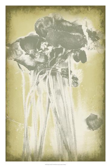 Poppies in Relief I-Jennifer Goldberger-Premium Giclee Print