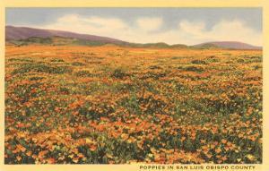 Poppies in San Luis Obispo