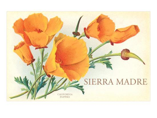 Poppies, Sierra Madre, California--Art Print