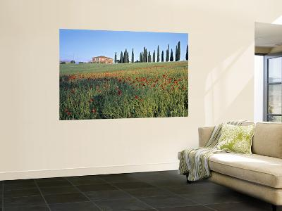 Poppies, Tuscany, Italy-Peter Adams-Wall Mural
